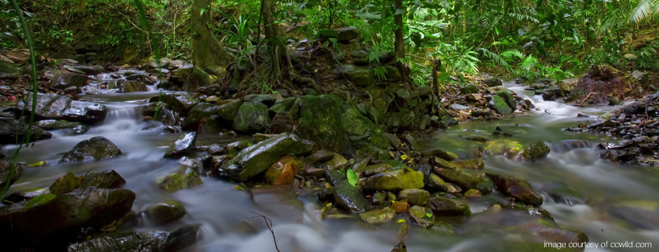Creek - Daintree Rainforest