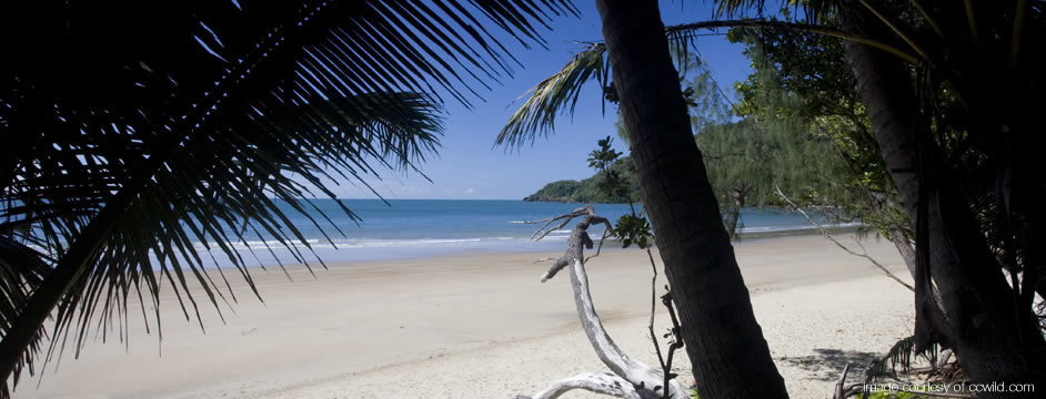 Beach - Daintree Rainforest